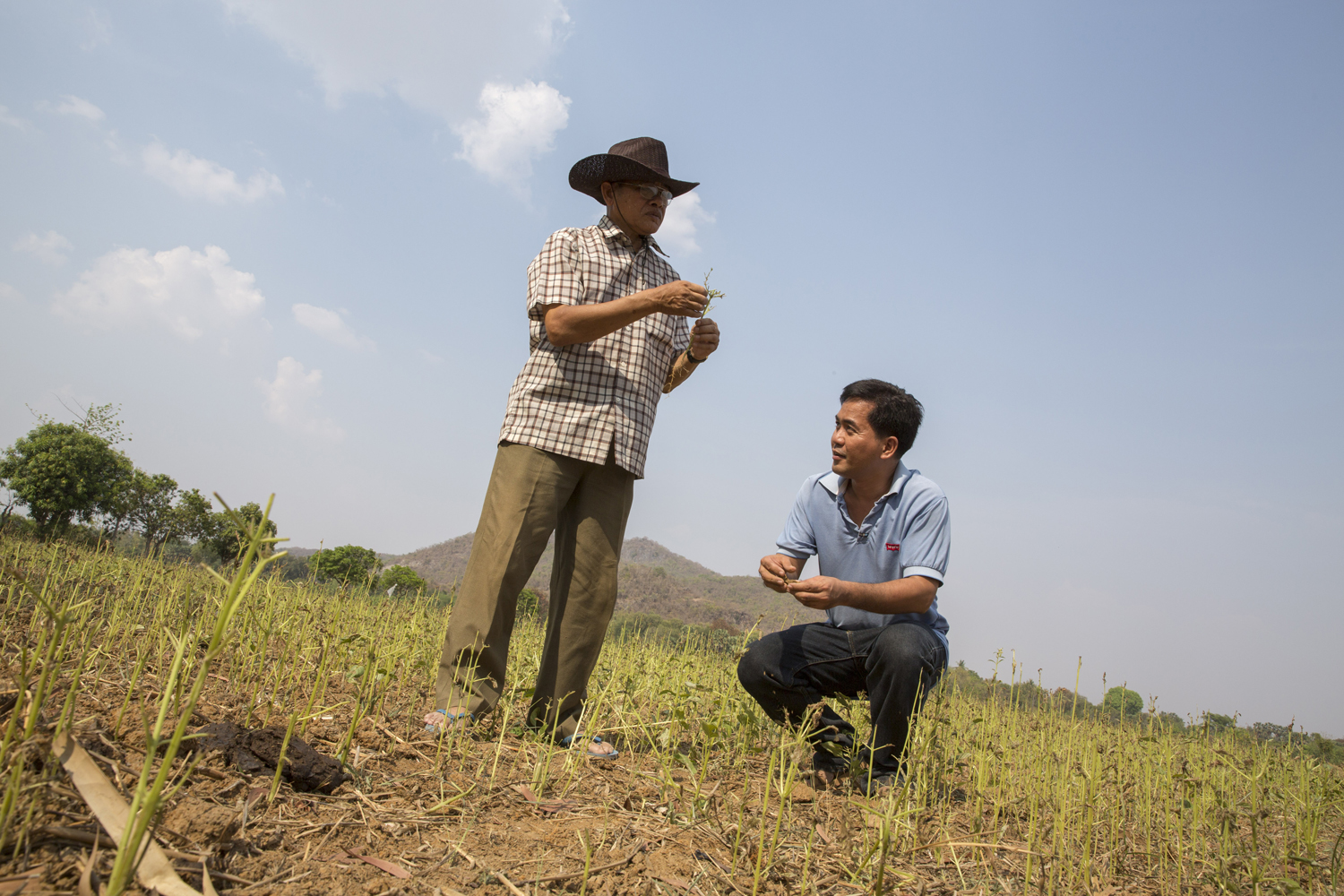 Volunteer abroad with voluntary service overseas vso volunteer giovanni villafuerte inspecting the crops and earth in the paddy fields of banan in cambodia solutioingenieria Image collections