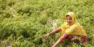 Murzina Khatun, a mother of three and farmer, crouches amidst her crops
