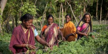Women farmers tend their crops in Bangladesh | VSO