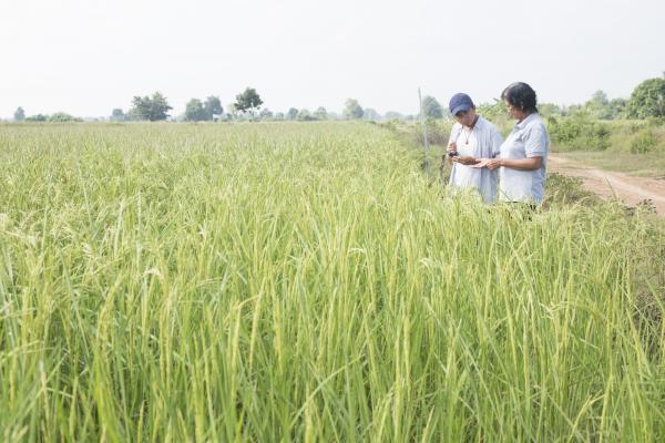 A VSO volunteer and a farmer stand at the edge of a crop field