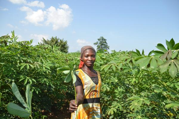A young woman stands amidst cassava plants which reach the height of her head