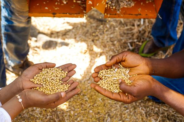 Millet milled by VSO-trained farmers in Nigeria
